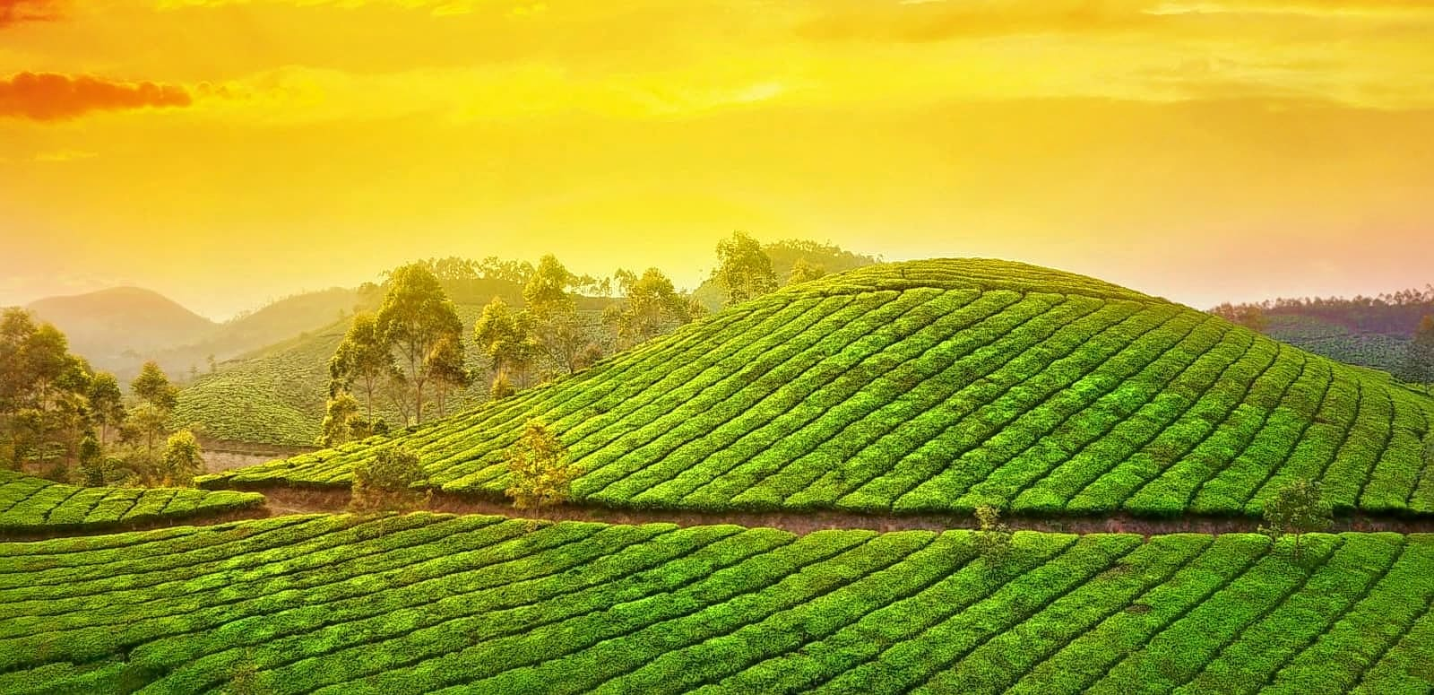 Image result for Step up to Munnar