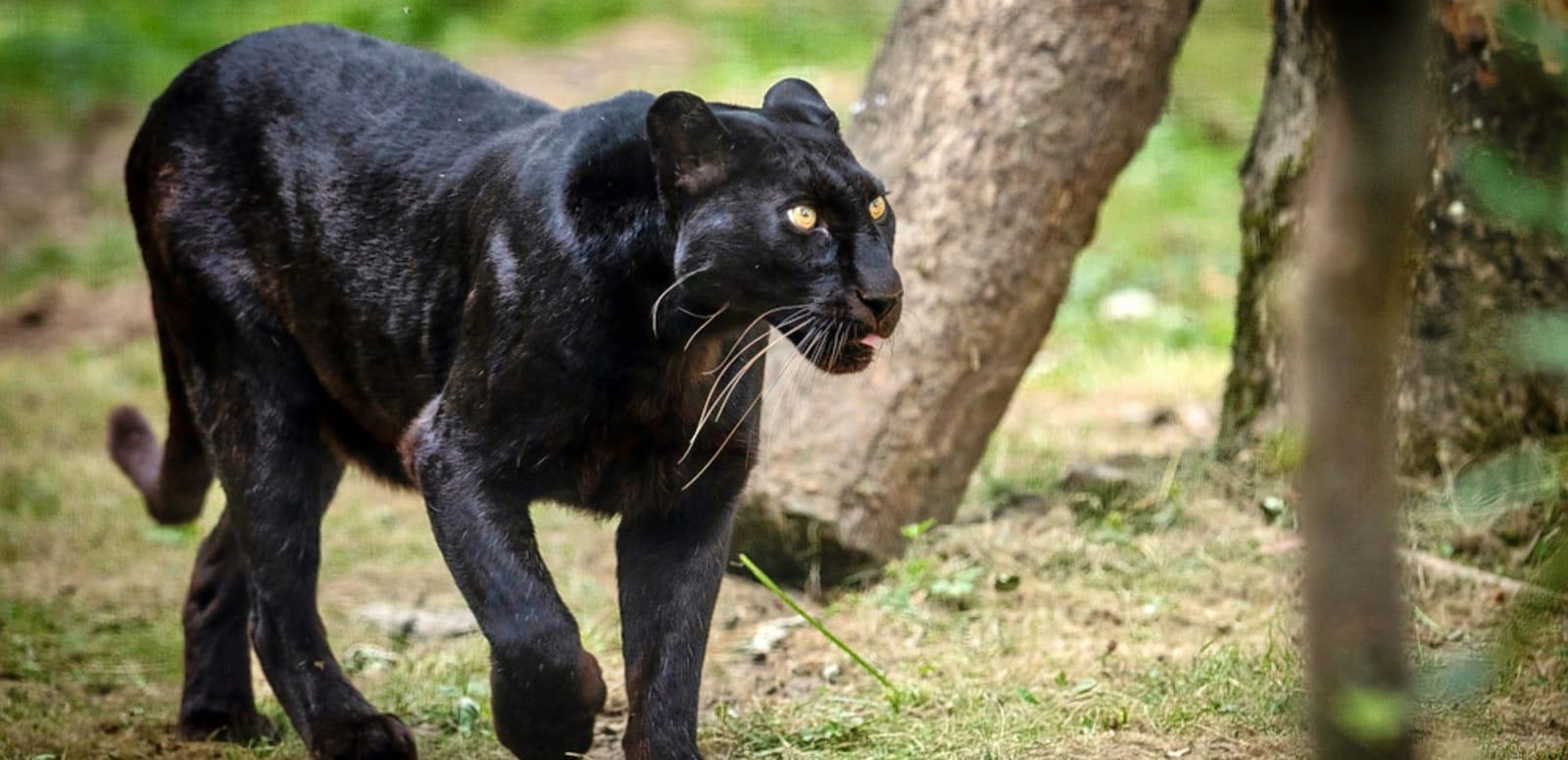 Image result for Dandeli Wildlife Sanctuary