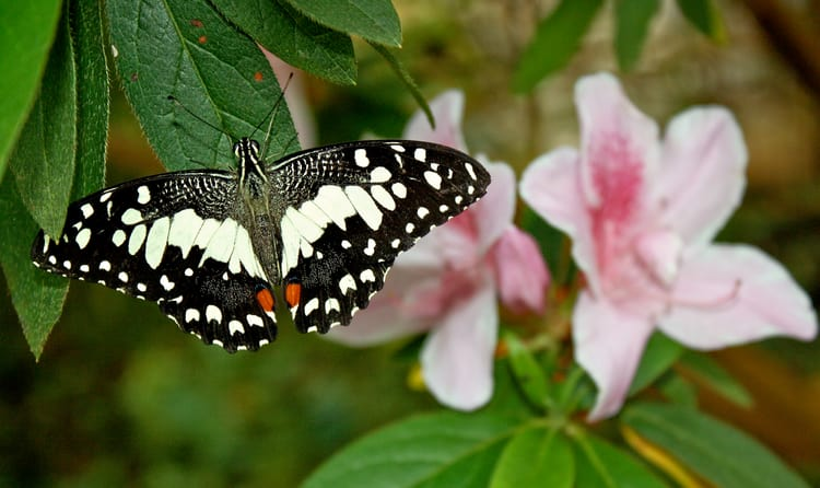 Visit Butterfly Farm