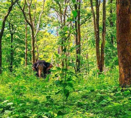 Anamalai Elephant Hills Tour