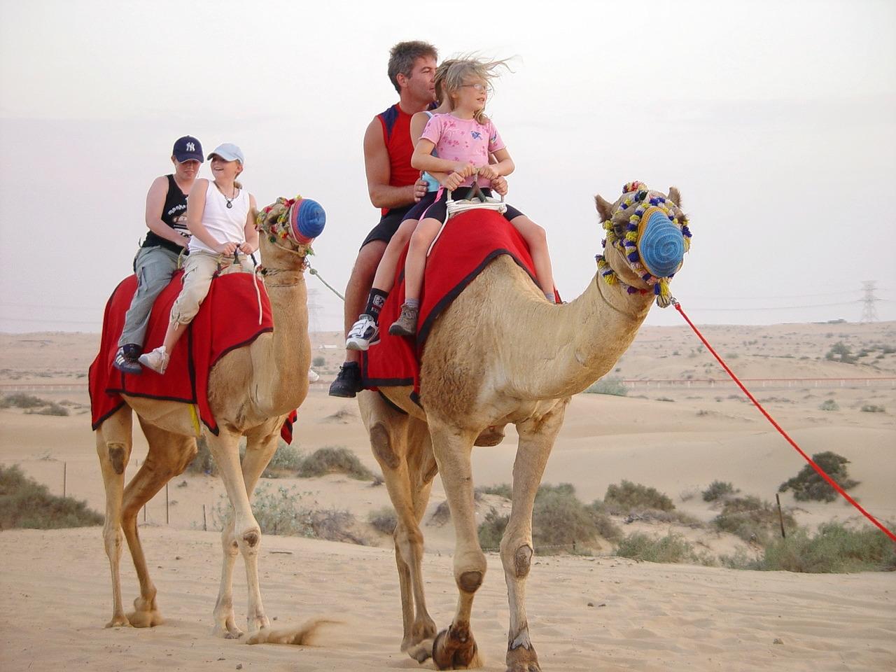 1511331438_camel-ride-dubai-camel-farm-dubai-camel-riding-dubai-desert-safari-dubai-camel-watching-dubaicamel-ride-in-dubai-03.jpg