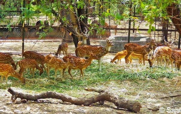 Deer_park_delhi_bagh-i-alam_ka_gumbad_kali_gumti_tohfewala_gumbad_pixelated_memories_sahil_ahuja_tombs_monuments_(3).jpg