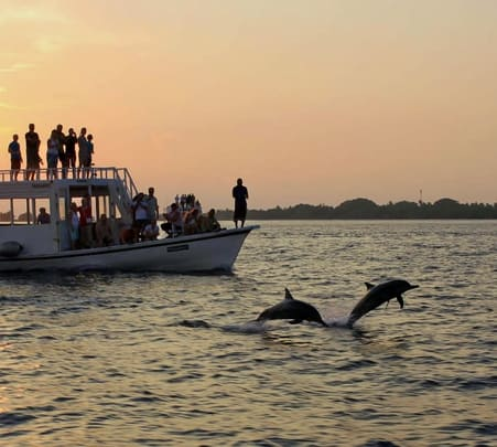 Dolphin Sunset Cruise in Maldvies