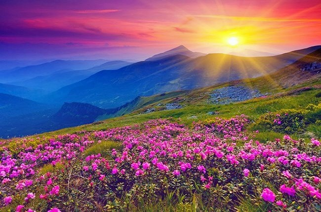Valley_of_flowers_2.jpg