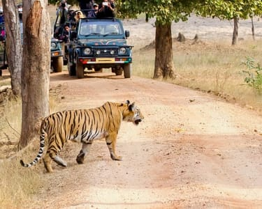 Camping with Safari & Horse Riding in Bandhavgarh