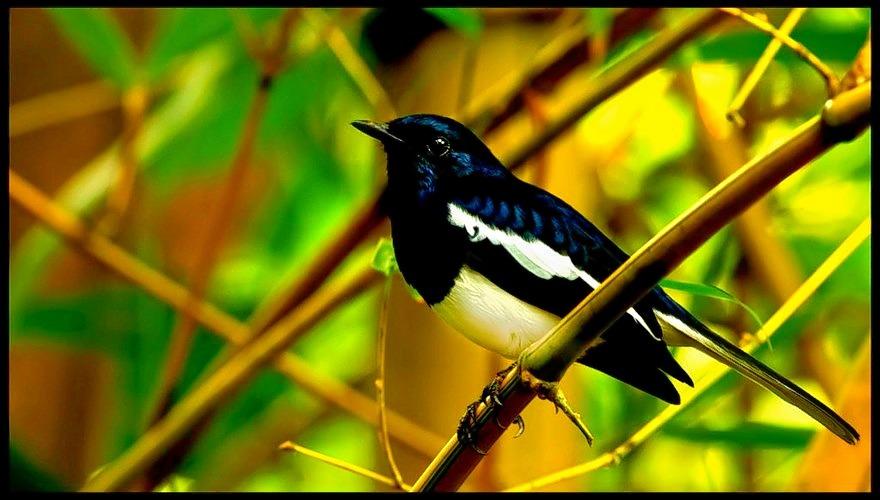 Thatekkad-birds-sactuary-1.jpg