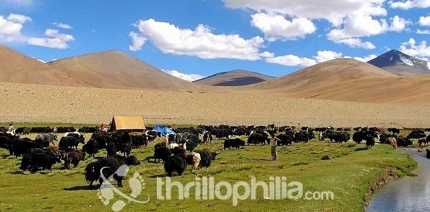 Nuruchan-1_ladakh.jpg