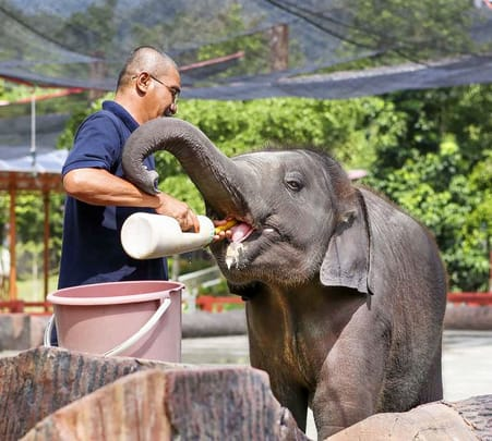 Kuala Gandah Elephant Sanctuary Tour @ Flat 15% off