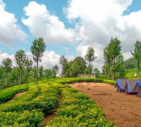 Camping Amidst Tea Plantations in Munnar Flat 20% off