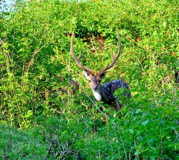 Wildlife Tour in Kerala for 6 days