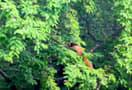 Chinnar_trekking-_livetheday_012.jpg