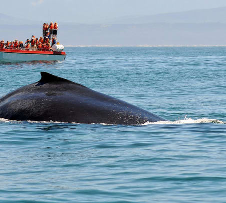 Whale Watching in Galle - Flat 25% off