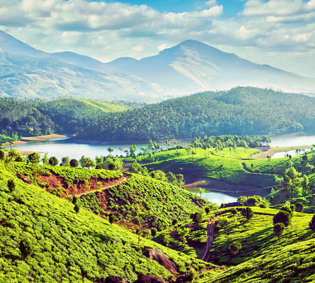 Nature Walk In Munnar
