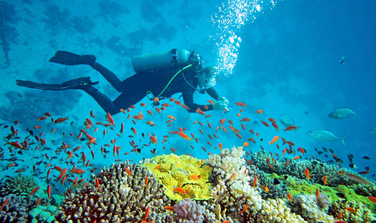 Underwater Adventure in Andaman Islands