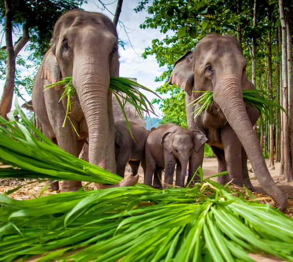 Elephant Camp and Orchid Sightseeing Tour in Chiang Mai