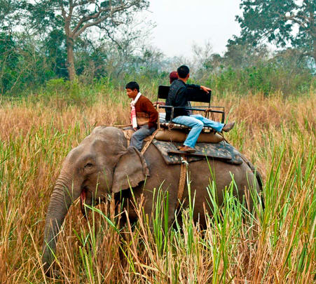 Wildlife Tour at Kaziranga National Park