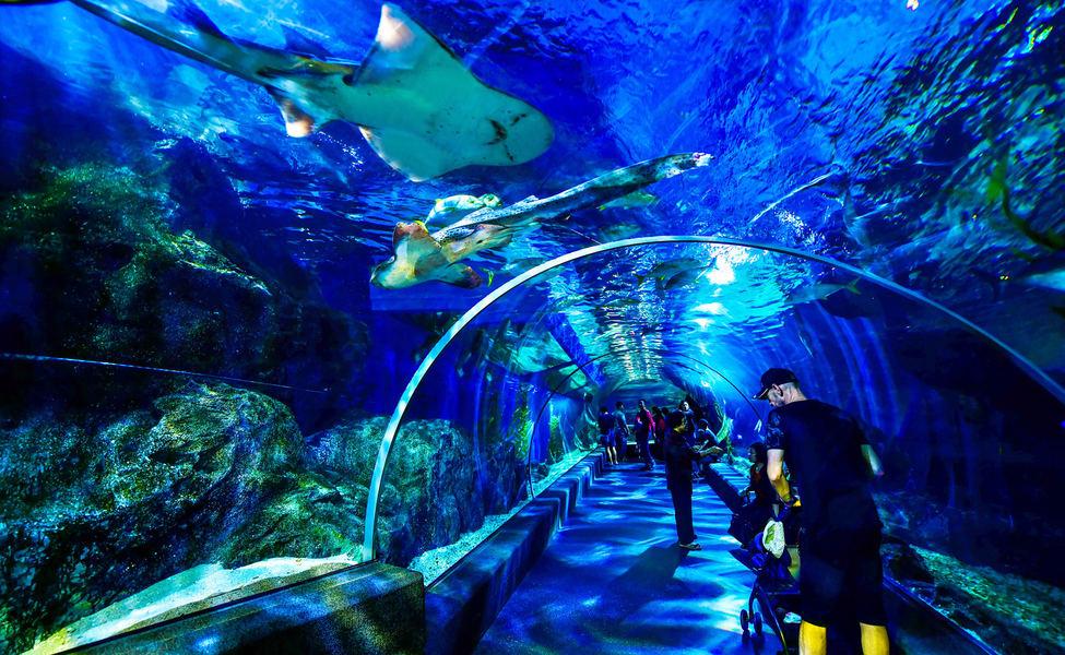Sea Life Bangkok Ocean World Tickets, Book Now & Save 20%