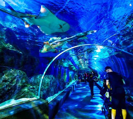 Sea Life Bangkok Ocean World - Flat 20% off