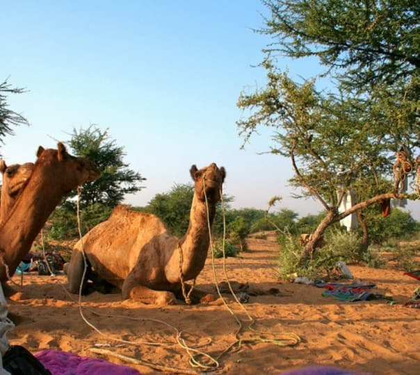 Royal Desert Safari in Jaisalmer