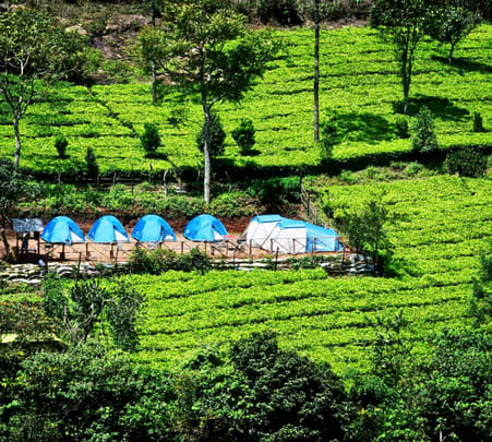 Camping Amidst Tea Plantation in Munnar