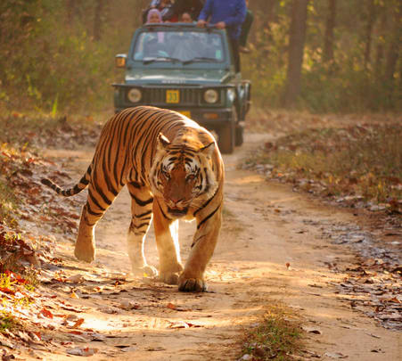 Kanha and Bandhavgarh National Park Visit with Sightseeing in Khajuraho