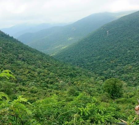 Lanku Trek in Darjeeling