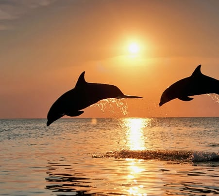 Dolphin Sightseeing in North Goa