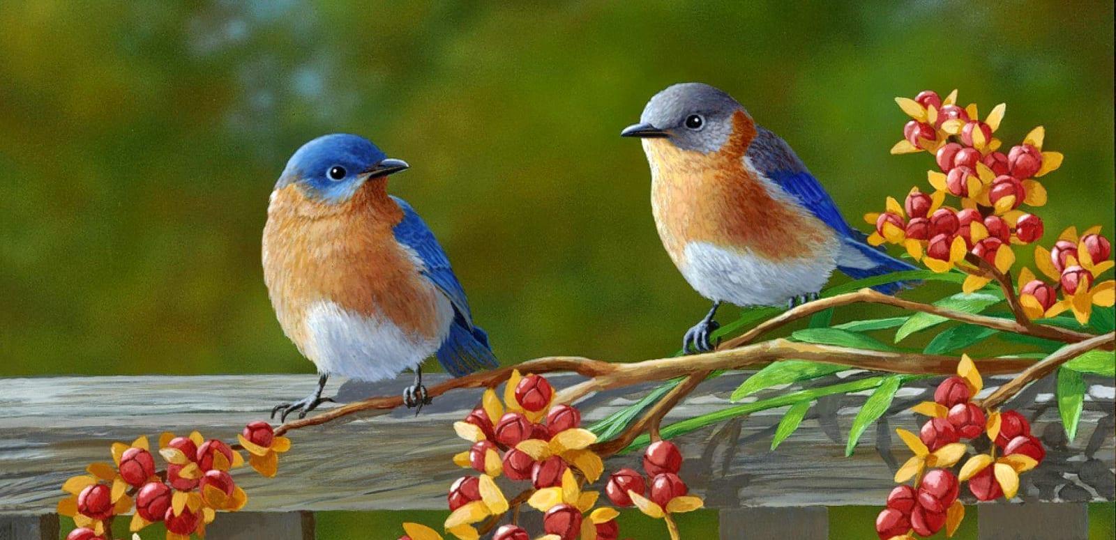 12 Best Bird Sanctuaries in Karnataka - 2019 (with Photos)