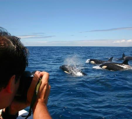 Dolphin Watching Cruise in Brisbane