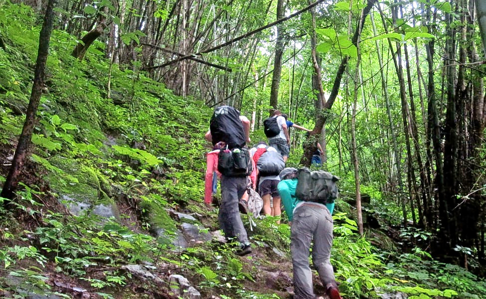 1586272064_climate-change-making-jungle-trekking-a-rarer-pleasure-with-decreased-forest-cover.jpg