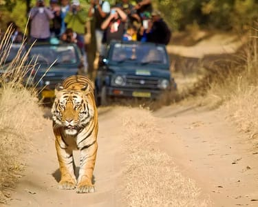 Camping with Safari at Bandhavgarh National Park