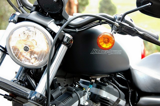 Harley_davidson_883_iron_1.jpg