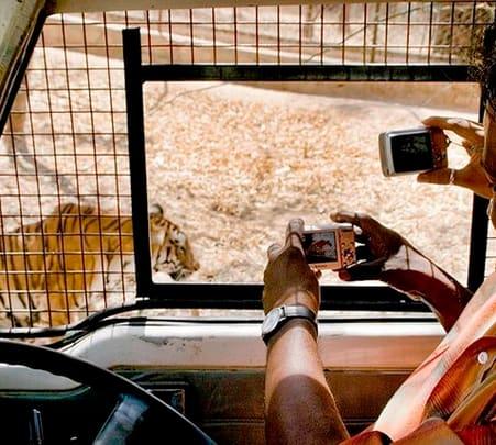Bannerghatta National Park Safari