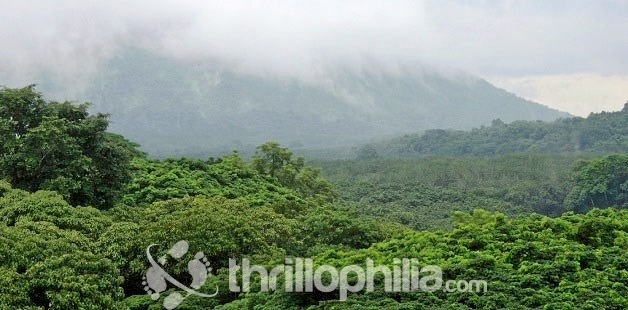 Chimmony-national-park-kerala-02.jpg