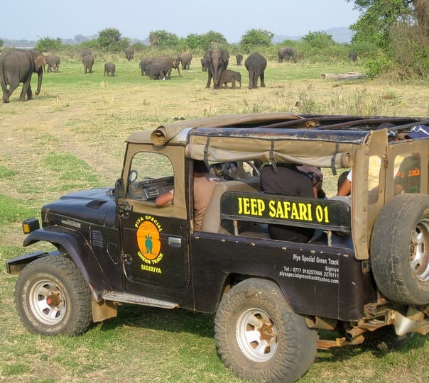 Day Tour to Udawalawe in Sri Lanka