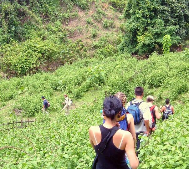 Trek to Naini Peak and Pangot