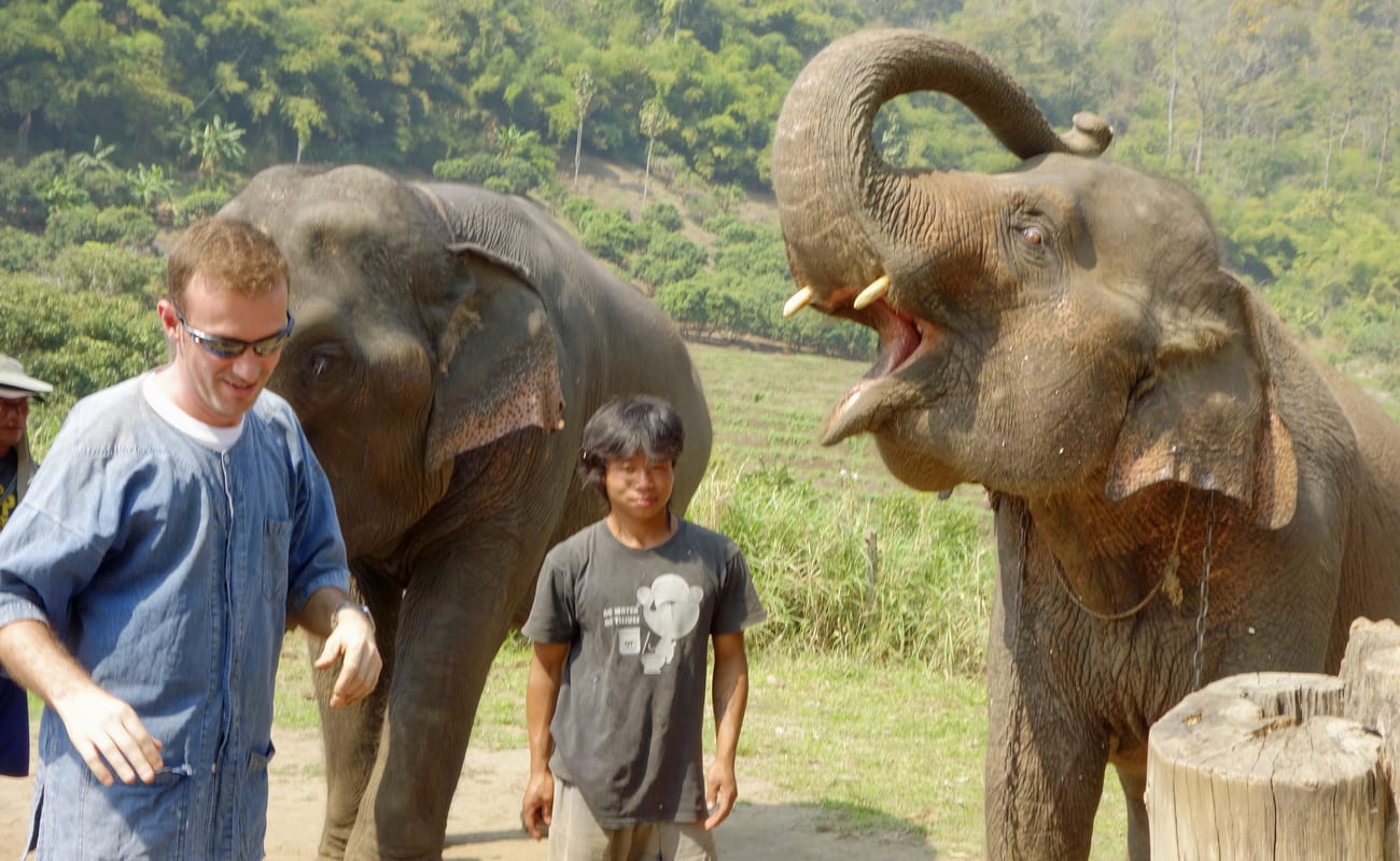 20 best chiang mai elephant camps even the baby elephants are a joy to see feed and bath there are opportunities to take bare back elephant ride and enjoy interacting with them biocorpaavc Gallery