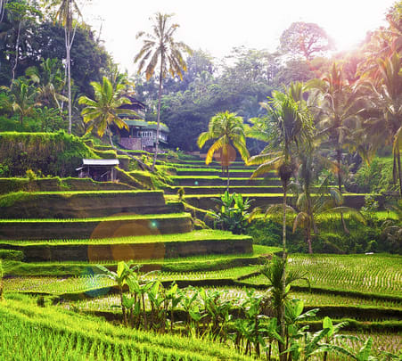 Tegalalang Rice Terrace Tour with Monkey Forest & Goa Gajah Flat 10% off