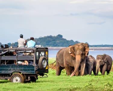 Udawalawe National Park Safari - Flat 20% off