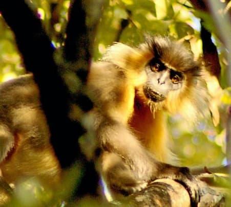 Wildlife Tour at Manas National Park