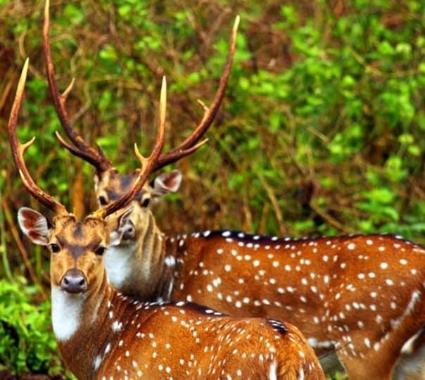 Wildlife and Adventure Activities, Dandeli