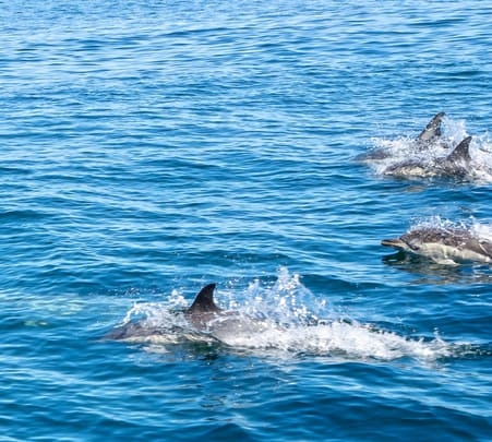 Dolphin Sightseeing Tour in North Goa