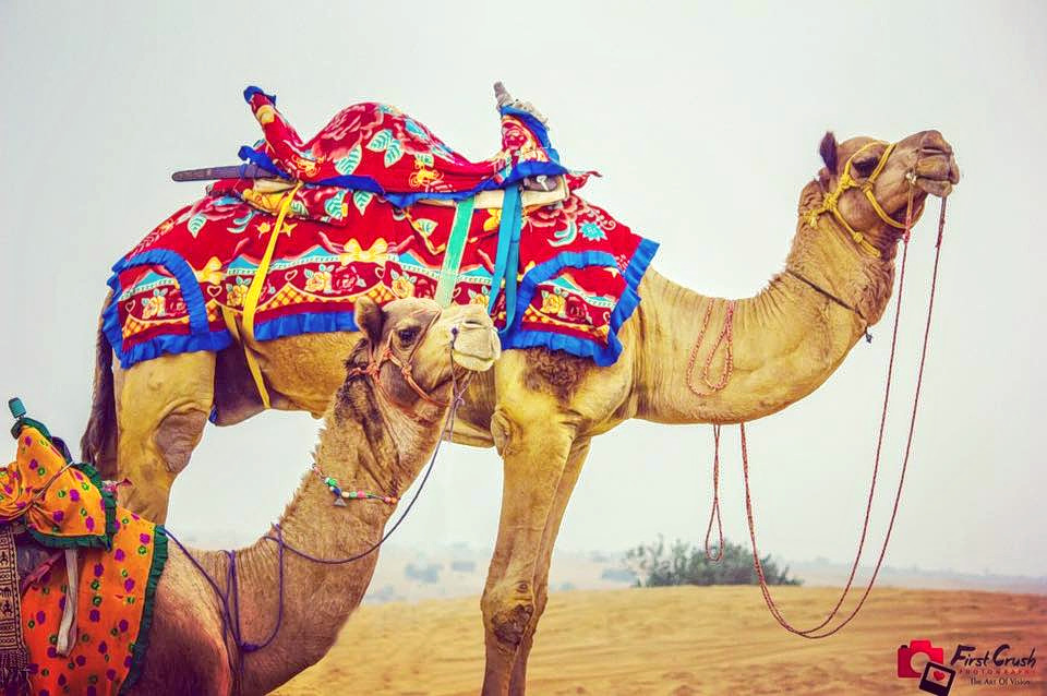 1509781654_camel_decorated.jpg