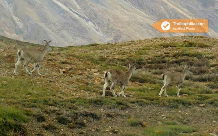 M_kanamo_peak_trek__himachal_pradesh_01.jpg