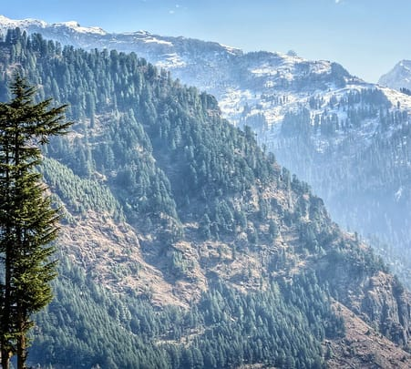 Black Forest Safari Experience in Manali
