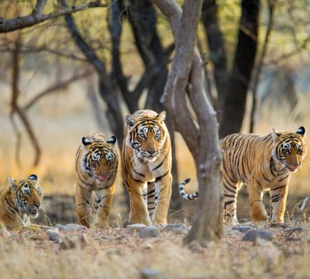 Delhi-ranthambore 2 Days Trip-flat 30% off