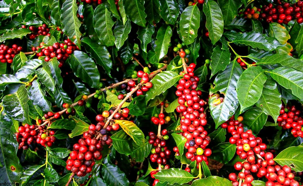 Coffee Plantation Tour In Coorg Flat 20% Off