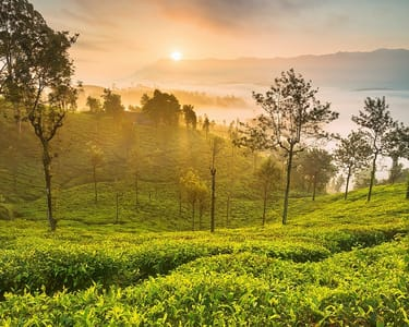 Camping and Trekking at Ooty