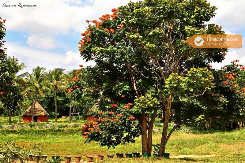 Jain_farms_(3).jpg