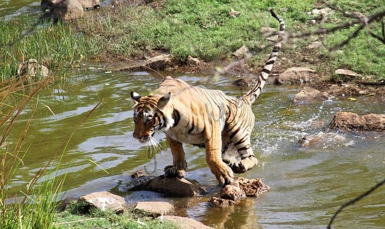 20 Best Wildlife Sanctuaries and National Parks of Rajasthan